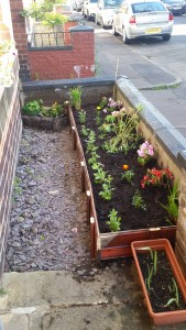 Raised bed constructed with old gate. Plants by Ciara